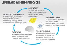 Will taking leptin help me lose weight